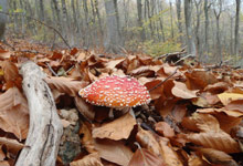 You will discover mushrooms almost all year round